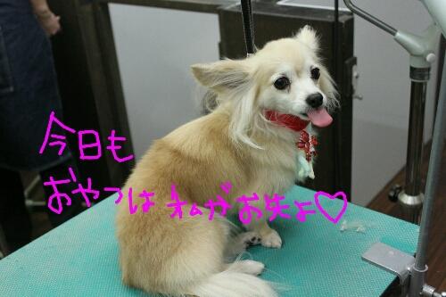 b0130018_1359691.jpg