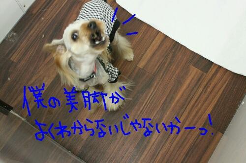 b0130018_1429160.jpg