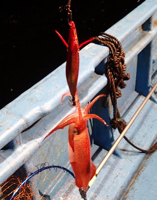 〇〇町〇〇浦より アオリイカ釣り 2014年11月26日(水)_d0171823_2153267.jpg