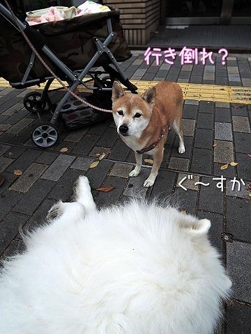 【モラタメ】 アップウォーク_c0062832_10253246.jpg