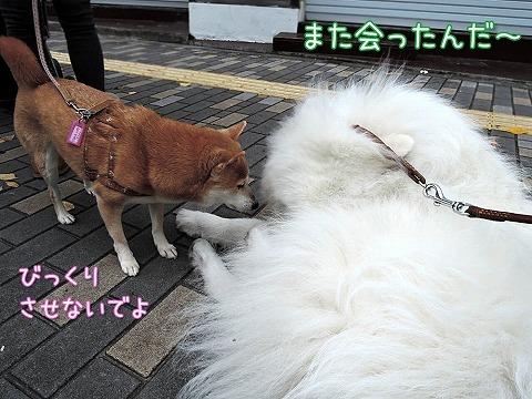 【モラタメ】 アップウォーク_c0062832_10254119.jpg