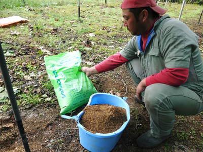 熊本ぶどう 社方園 貯蔵用分を蓄えさせるためのお礼肥え(基肥)散布作業 その1_a0254656_180040.jpg