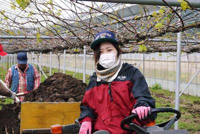 熊本ぶどう 社方園 貯蔵用分を蓄えさせるためのお礼肥え(基肥)散布作業 その1_a0254656_18375111.jpg