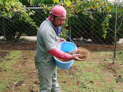 熊本ぶどう 社方園 貯蔵用分を蓄えさせるためのお礼肥え(基肥)散布作業 その1_a0254656_1863424.jpg