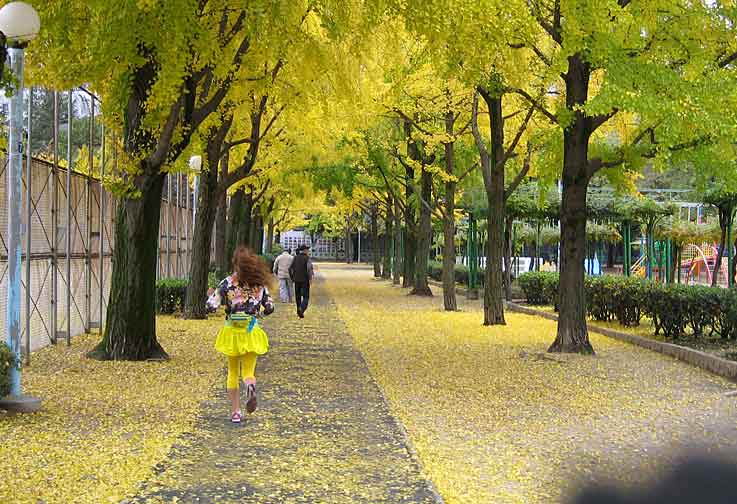秋色と言うより冬色かな_b0057679_9461570.jpg