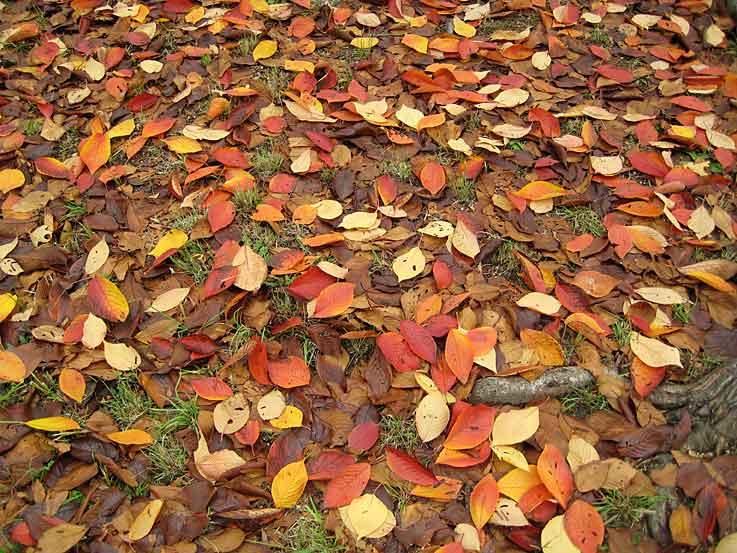 秋色と言うより冬色かな_b0057679_948338.jpg