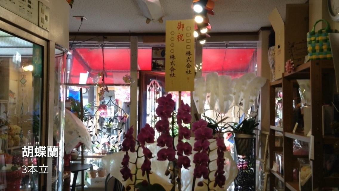 胡蝶蘭 3本立 販売終了。大阪難波なんばの花屋動画。_b0344880_18243897.jpg