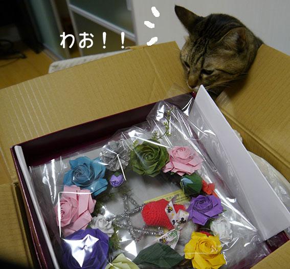 ミニニットさんから届きました♬_d0071596_2058263.jpg