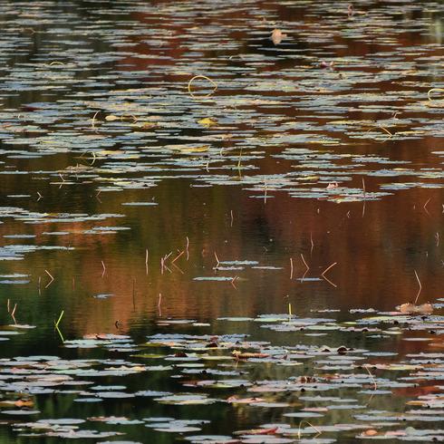 極楽寺山 蛇の池と周辺_f0099102_14113875.jpg