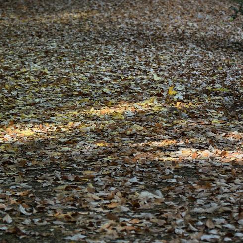極楽寺山 蛇の池と周辺_f0099102_14122452.jpg