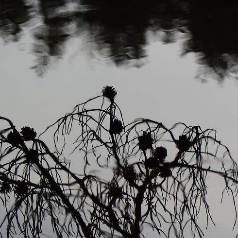 極楽寺山 蛇の池と周辺_f0099102_1442641.jpg