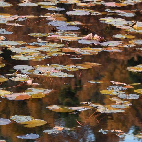 極楽寺山 蛇の池と周辺_f0099102_14911100.jpg