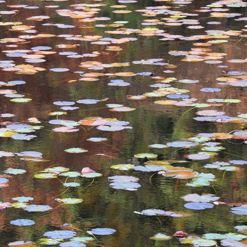 極楽寺山 蛇の池と周辺_f0099102_1491976.jpg