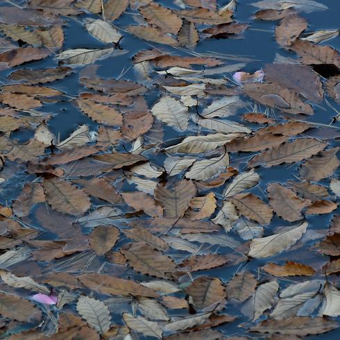 極楽寺山 蛇の池と周辺_f0099102_1493580.jpg
