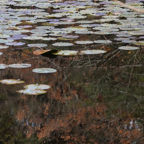 極楽寺山 蛇の池と周辺_f0099102_1495466.jpg