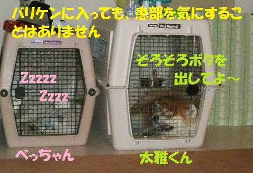 f0121712_135025.jpg