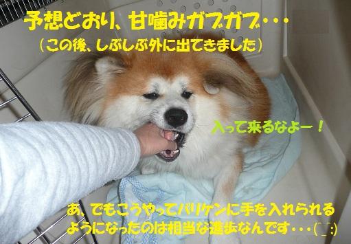 f0121712_15171315.jpg