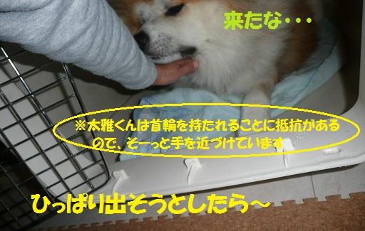 f0121712_1517260.jpg