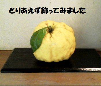かっぱ父の愛の鬼柚子_e0234016_16473195.jpg