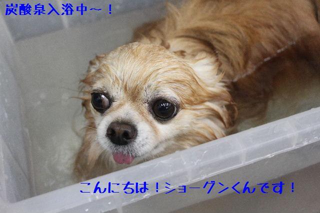 号泣_b0130018_16512143.jpg