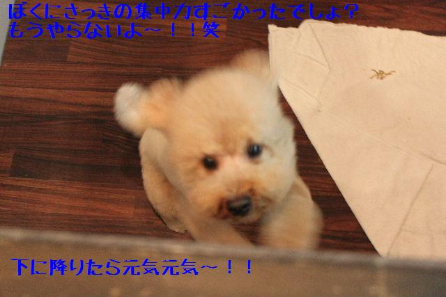 号泣_b0130018_16563362.jpg