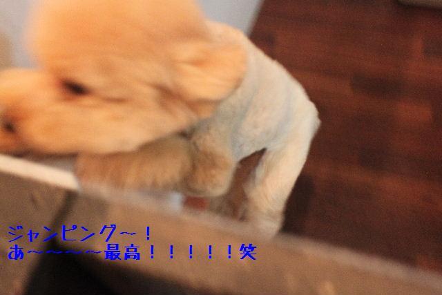 b0130018_16564340.jpg