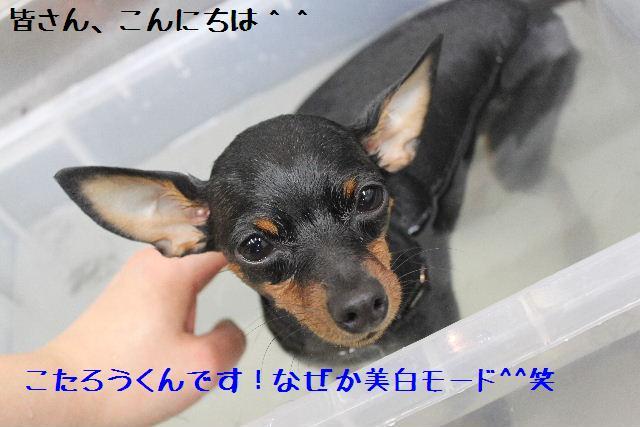 号泣_b0130018_1775434.jpg