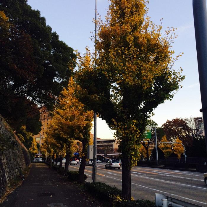 名古屋 Westin Hotel で、お散歩と 会食_f0062122_0235820.jpg