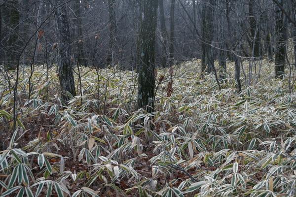 森の色_b0174425_1819221.jpg