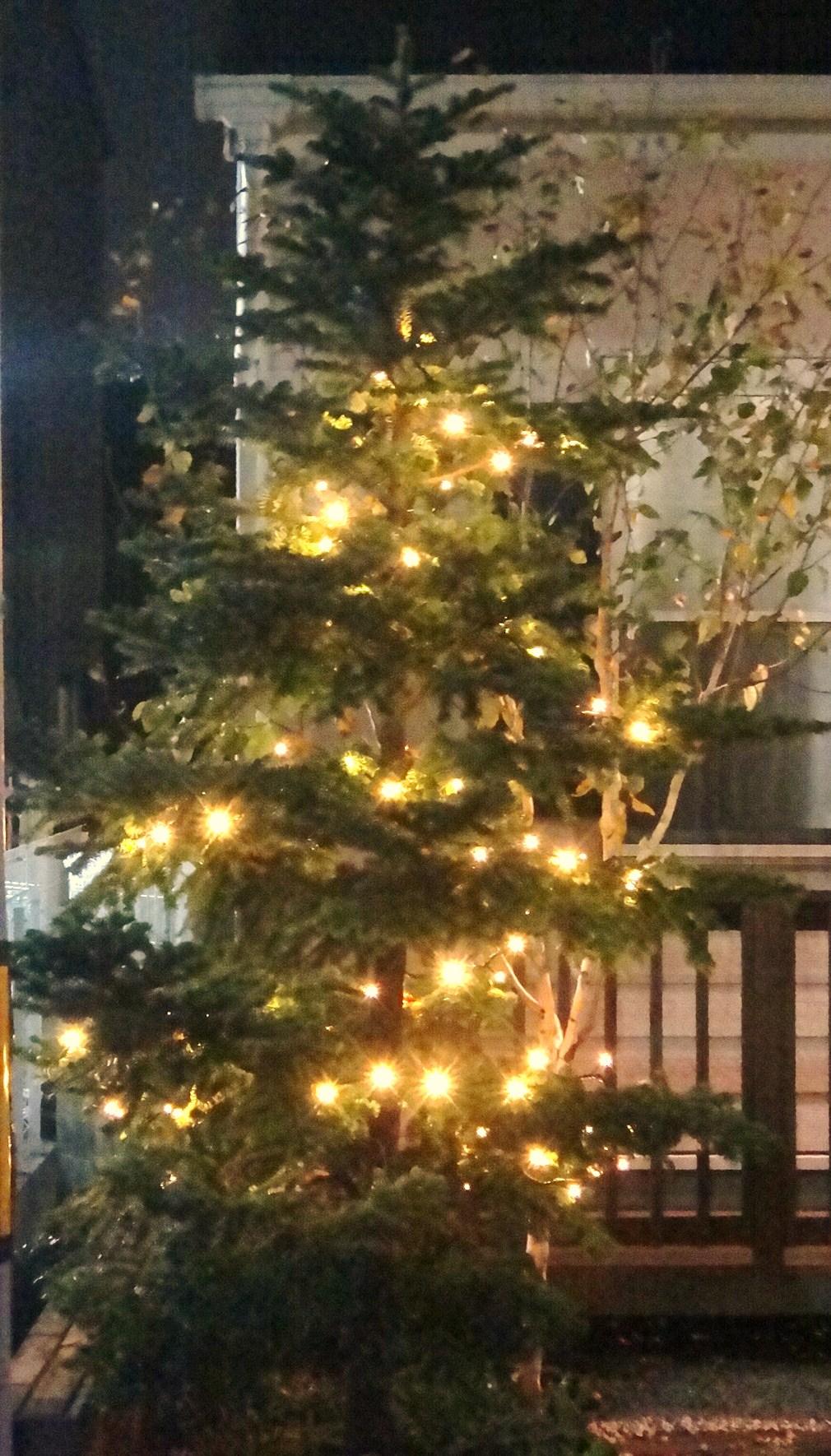 いよいよクリスマスツリー登場! パート2_d0120628_23363567.jpg