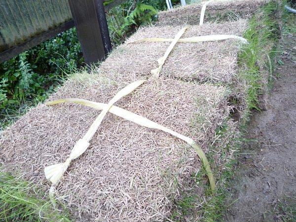 2014年11月28日 庭の芝張り作業 ①_b0341140_18314721.jpg