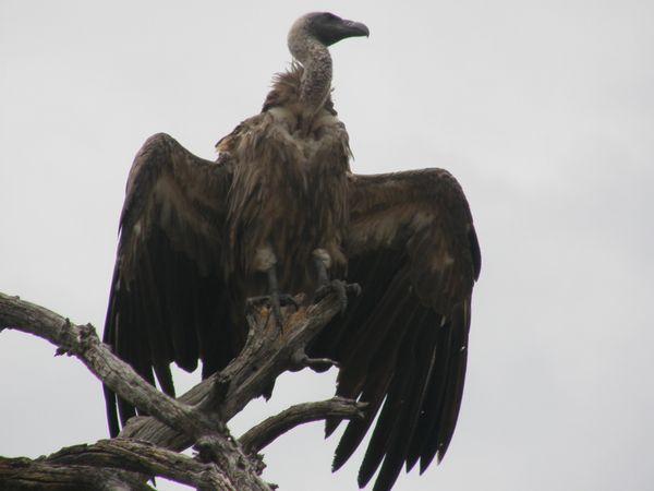 南アフリカ旅行⑦ チョべ国立公園_f0066555_10512453.jpg