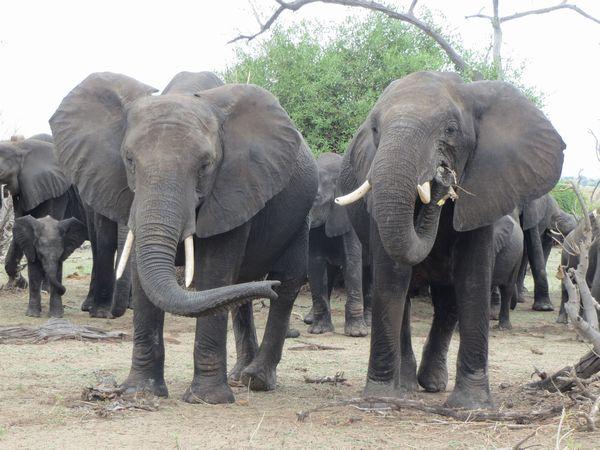 南アフリカ旅行⑦ チョべ国立公園_f0066555_11275894.jpg
