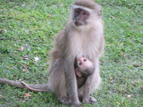 南アフリカ旅行⑦ チョべ国立公園_f0066555_14182491.jpg