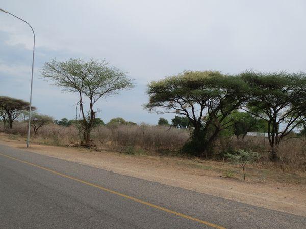 南アフリカ旅行⑦ チョべ国立公園_f0066555_9385189.jpg