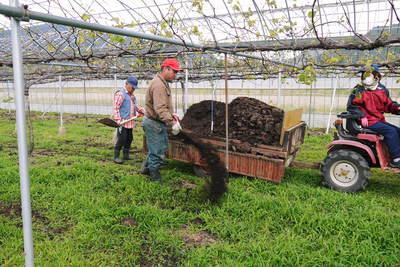 熊本ぶどう 社方園 貯蔵用分を蓄えさせるためのお礼肥え(基肥)散布作業 その2_a0254656_17261556.jpg