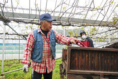 熊本ぶどう 社方園 貯蔵用分を蓄えさせるためのお礼肥え(基肥)散布作業 その2_a0254656_17544942.jpg