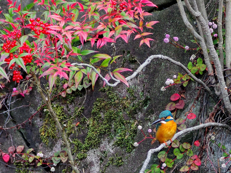 公園のカワセミ_f0215767_1782154.jpg