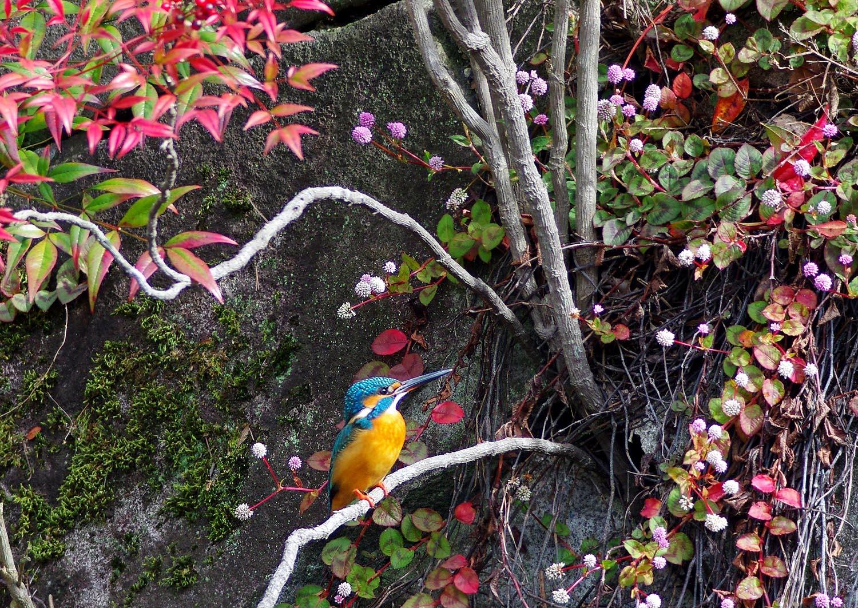 公園のカワセミ_f0215767_179557.jpg