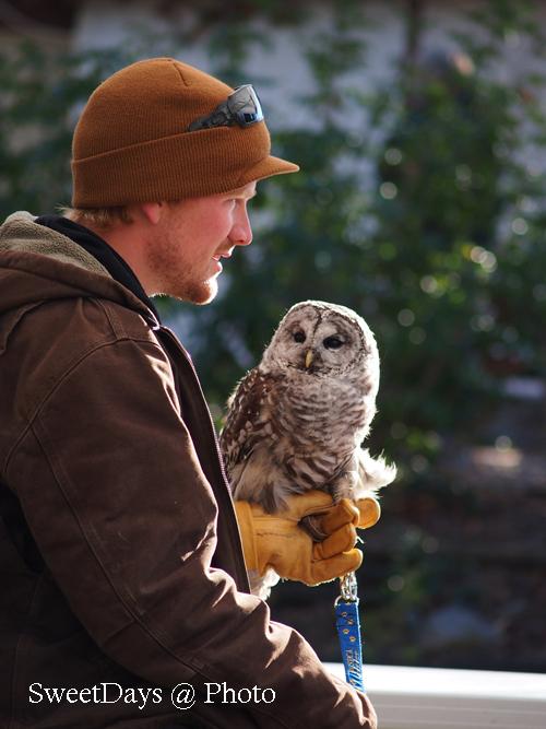 Fraser Valley Bald Eagle Festival_e0046675_824069.jpg