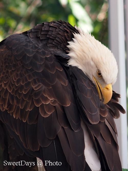 Fraser Valley Bald Eagle Festival_e0046675_824232.jpg