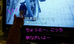 b0200310_2004840.jpg