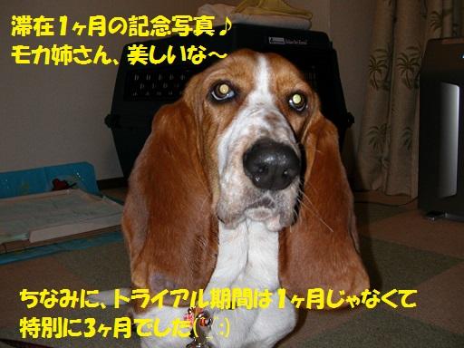f0121712_1621999.jpg