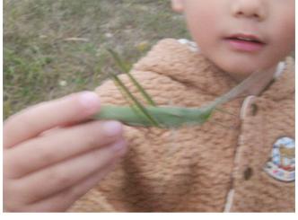 秋のひろいもの・」幼児クラス(上高野・比良)_f0211514_18341310.jpg