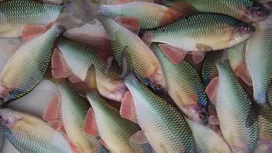 楽しい日本淡水魚ブログ♪_a0315918_21080291.jpg
