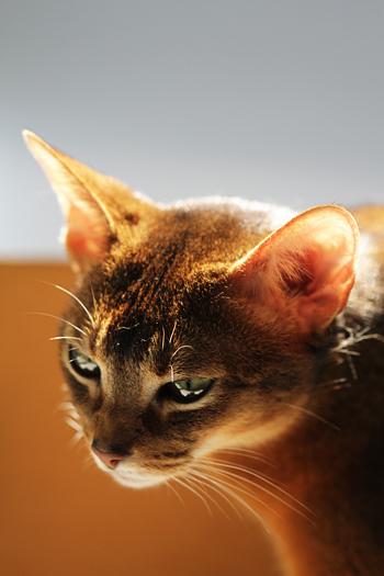 [猫的]入浴と日光浴_e0090124_0213271.jpg