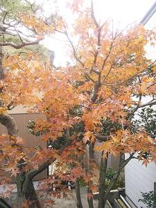 冬のおしたく展_f0233340_13523269.jpg