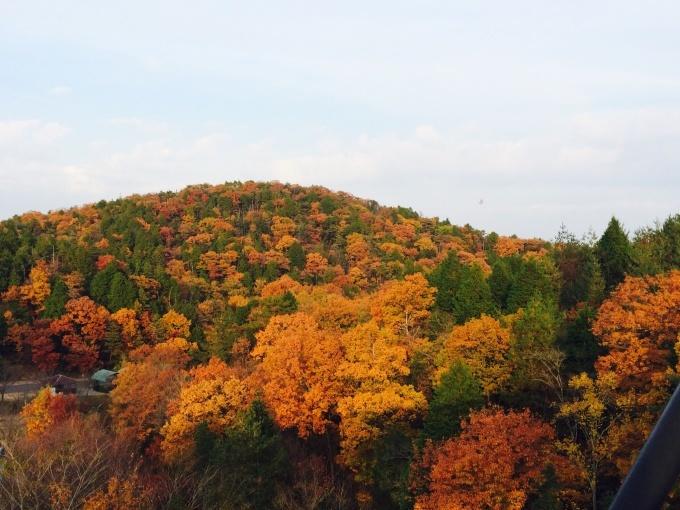 秋を見つけよう!_a0285570_23015776.jpg