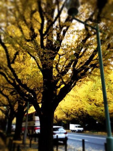 東京校 11月のソーイング講座_d0091671_12435534.jpg