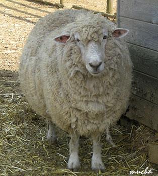 ひつじとヤギの違い?? : COZY COZY HAIR のコジコジな部屋
